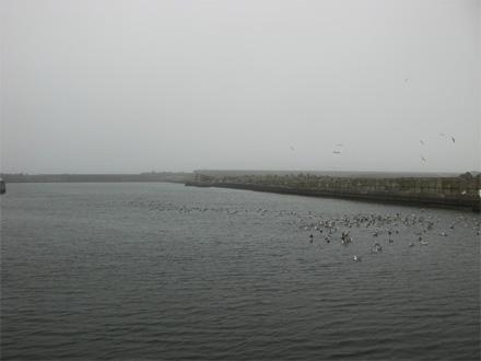 20080506_0001